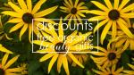 Weekly Discounts and Free Organic Beauty Gifts #125